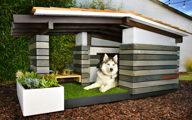 Midcentury modern dog houses by Pijuan Design