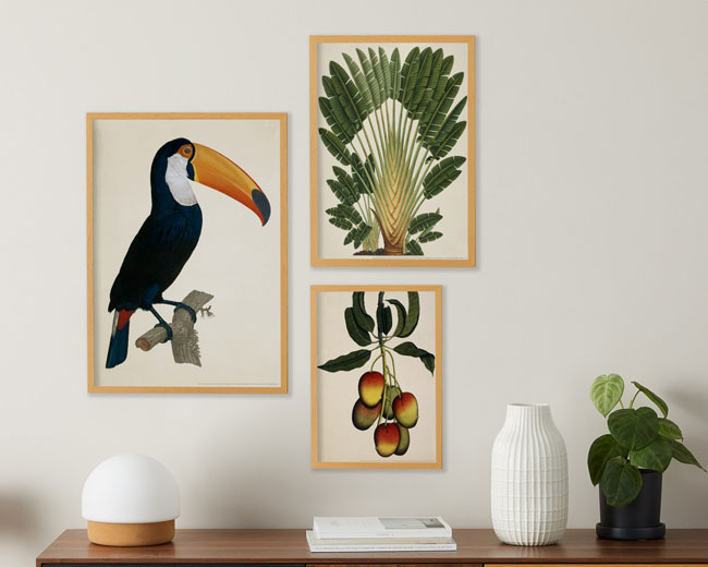 Vintage Natural History Museum print sets at Made